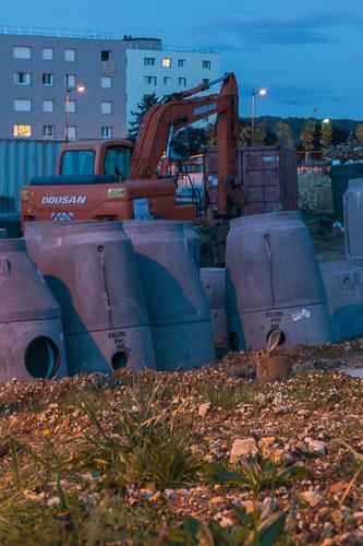 ANRU des Boutardes : les lapins, eux, semblent ne pas avoir de réserves quant aux travaux...